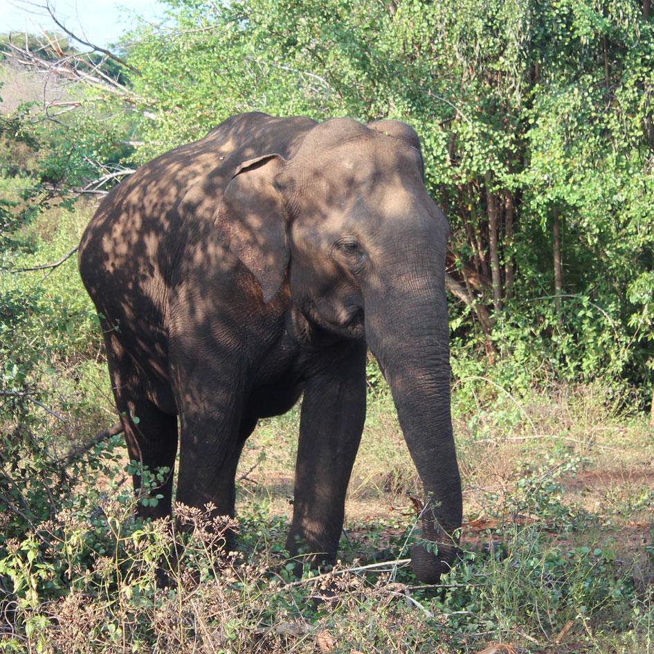Safari_Udawalawe_National_Park_1