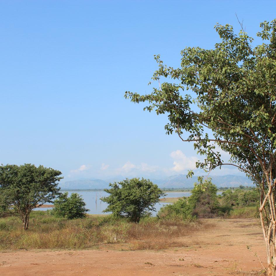 Safari_Udawalawe_National_Park_11