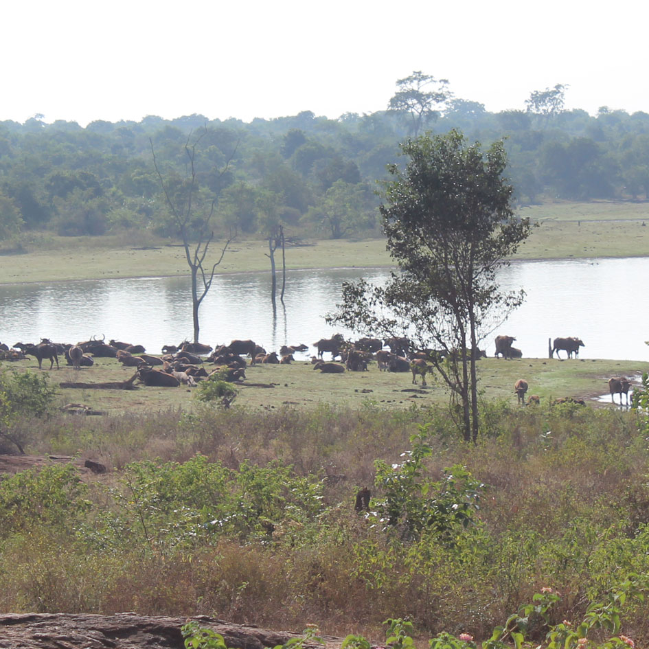 Safari_Udawalawe_National_Park_12
