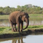 Safari_Udawalawe_National_Park_3