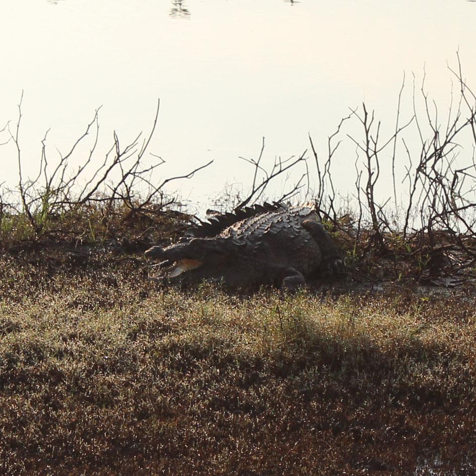 Safari_Udawalawe_National_Park_4