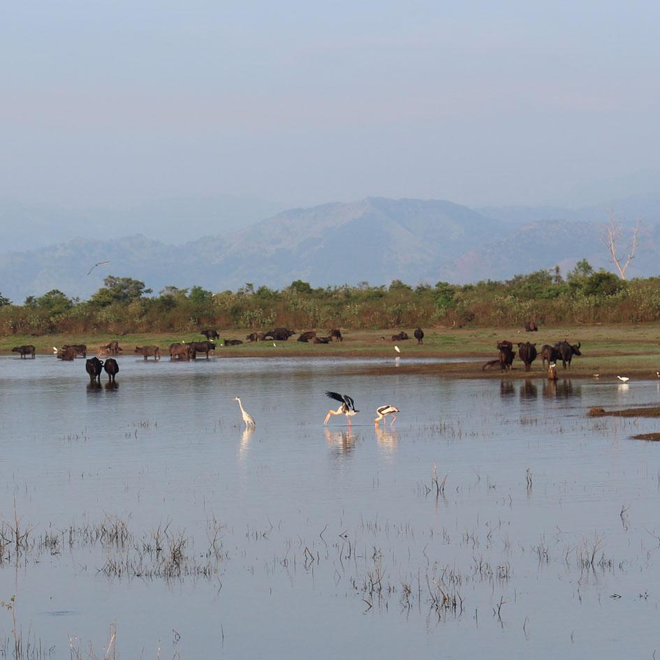 Safari_Udawalawe_National_Park_5