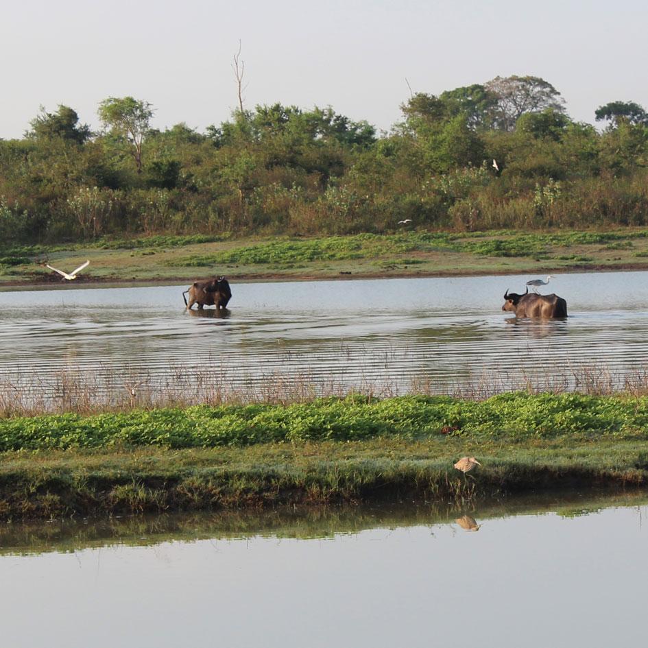 Safari_Udawalawe_National_Park_6